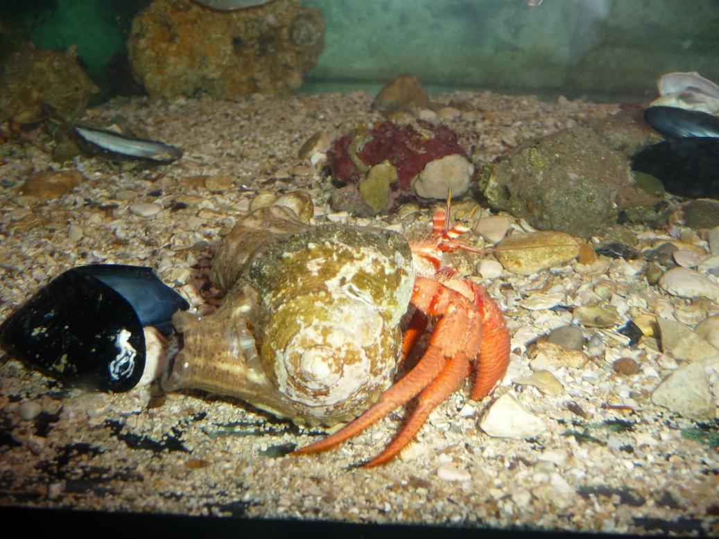 Istrie - akvárium